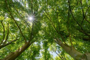 Forêt Martin Dellicour