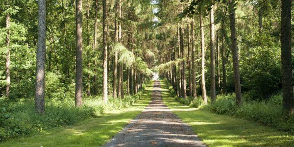 Balade forêt Condroz